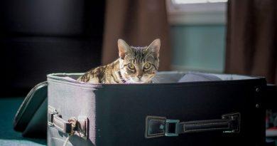 transport životinja avionom